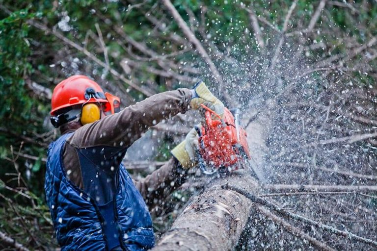 How to Find a Reliable Tree Surgeon