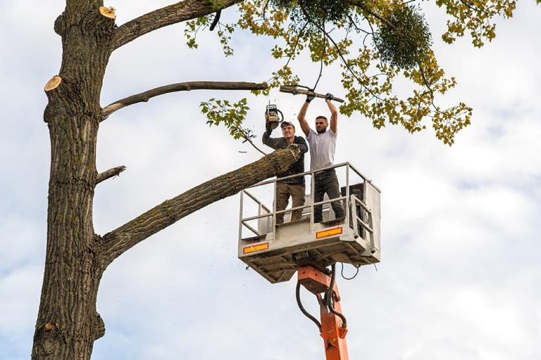 Is it expensive to remove a tree, how can I save money on tree removal?